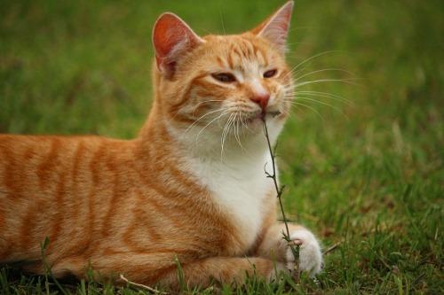 cat-1401564_960_720