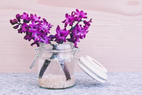 hyacinth-747157_960_720